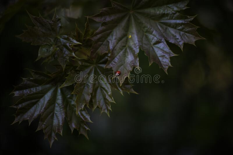 Macro Photography of Tree Leaves royalty free stock image