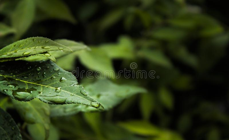Macro Photography of Water Dew on Green Leaf Plant royalty free stock photo