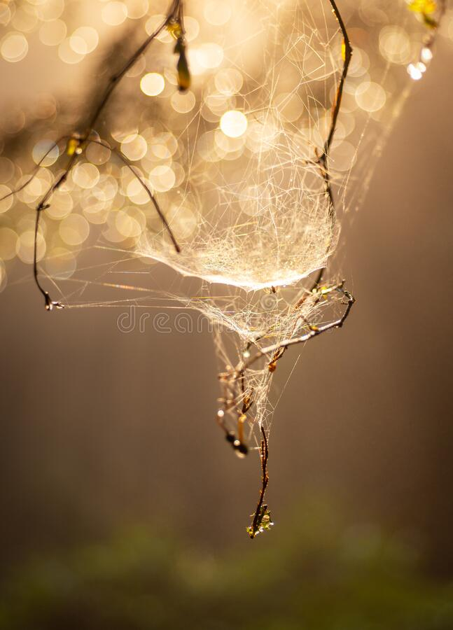 Macro photography of water drops on a beautiful cobweb in backlight, with small leaves of the plant where it hangs green 3. Macro photography of water drops on a royalty free stock photography