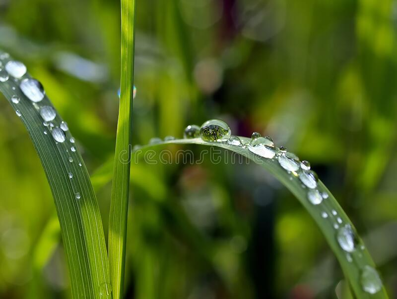 Macro Photography of Watered Green Leaf Plant stock image