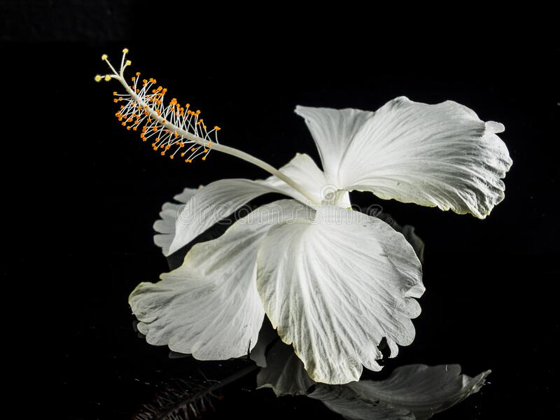 Macro Photography of White Flower royalty free stock images