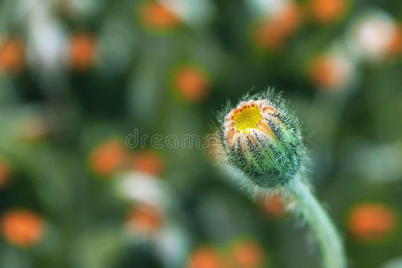 Macro photos de belle fleur La fleur de champ est à tolérances serrées image stock