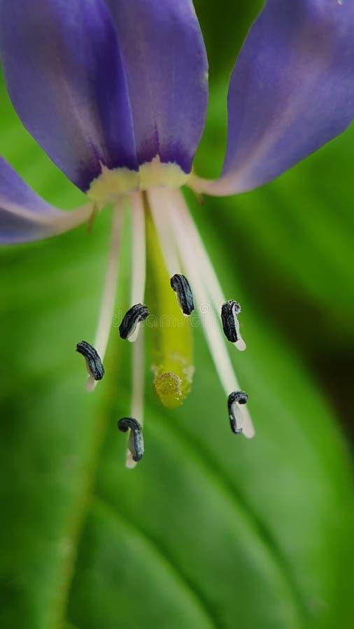 Macro Picture of Tiny Flower Pistil royalty-vrije stock fotografie