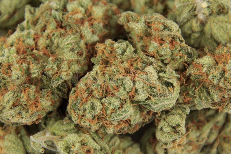 Macro plan rapproché de cannabis de bourgeon médical de marijuana image stock
