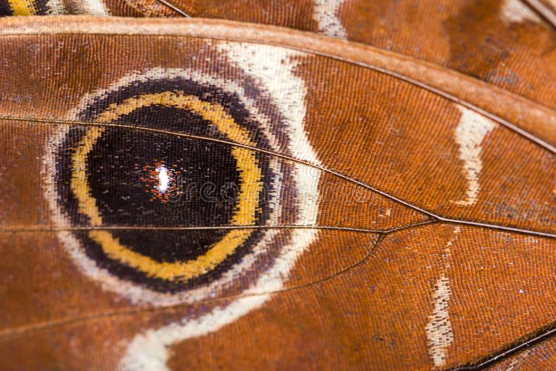 Macro plan rapproch? de mod?le brun de fond de texture d'aile de papillon photographie stock libre de droits