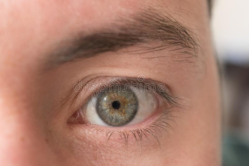 Macro portrait of a gray eye and brown center stock image