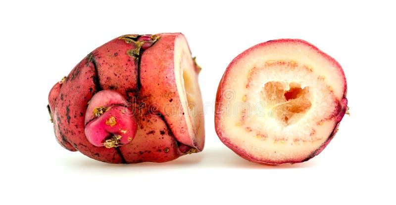 Macro primo piano dell'igname rosa diviso in due della Nuova Zelanda di oca fotografia stock libera da diritti