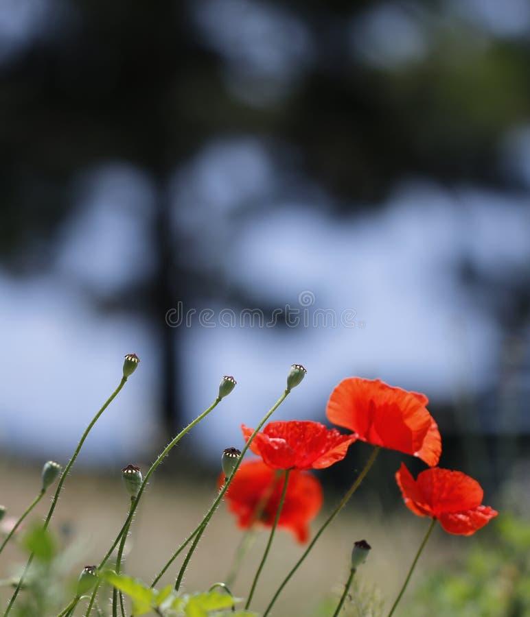Macro projectile d'une fleur image stock