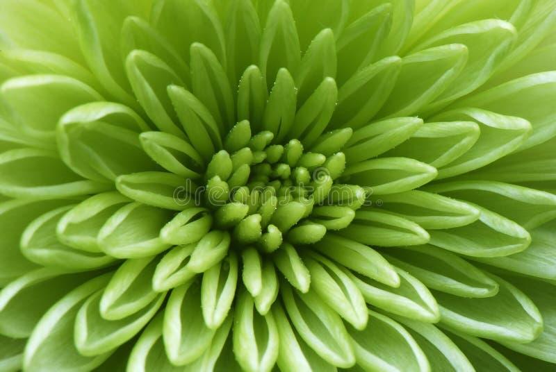 Macro projectile d'une fleur verte photo libre de droits