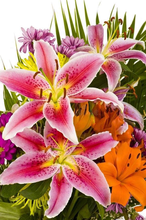 Macro projectile de belle fleur images libres de droits
