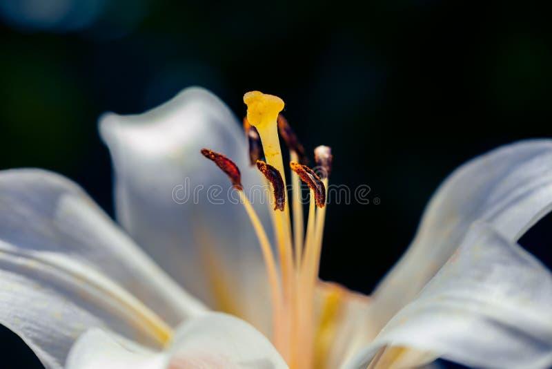 Macro projectile de fleur Photographie de fond de nature photos stock