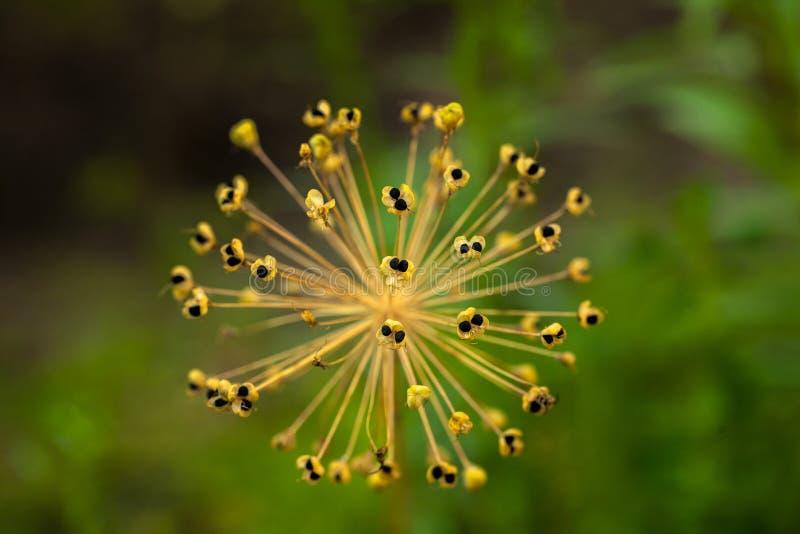 Macro projectile de fleur Photographie de fond de nature Photo de plan rapproché photographie stock libre de droits