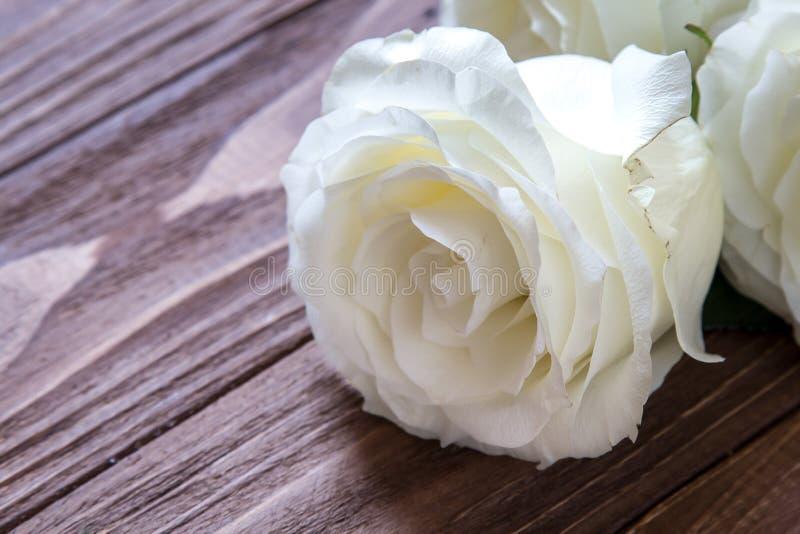 Macro punto di vista della rosa di bianco sulla tavola di legno di lusso fotografie stock