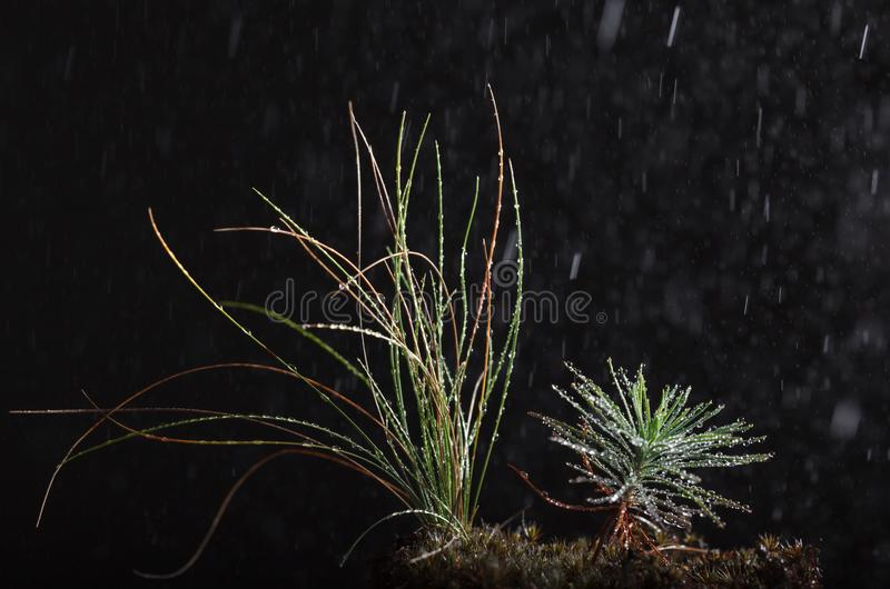 Macro of rain in forest royalty free stock image