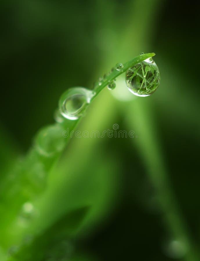 Macro of raindrop. Nature composition royalty free stock photo