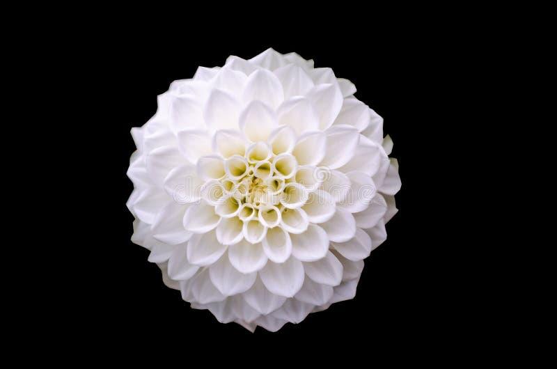 Macro ripresa del fiore bianco fotografie stock libere da diritti