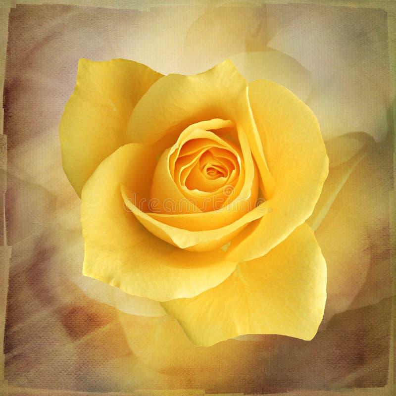 Macro rosa gialla sulla carta da parati d'annata di arte royalty illustrazione gratis