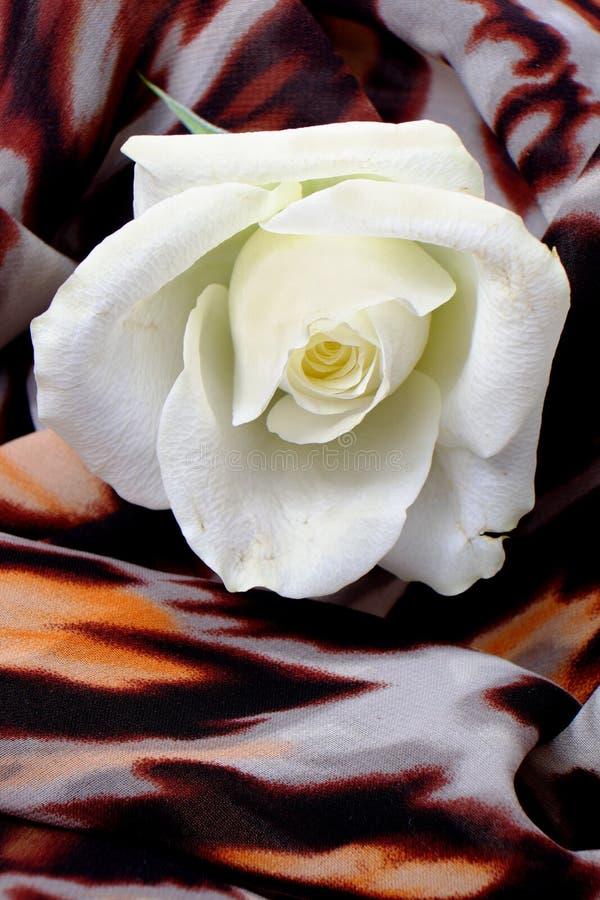 Macro rose de blanc sur le fond avec le motif de léopard images stock