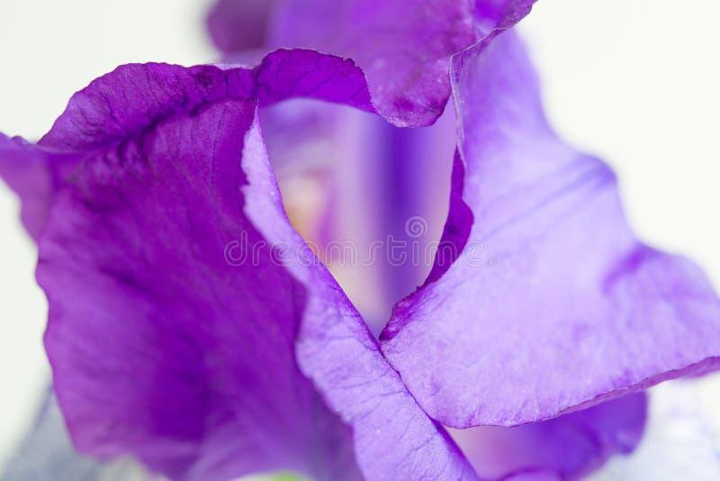 Macro roxo da flor da íris imagens de stock royalty free
