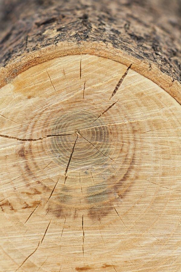 Macro Sawed fora da madeira fotografia de stock royalty free