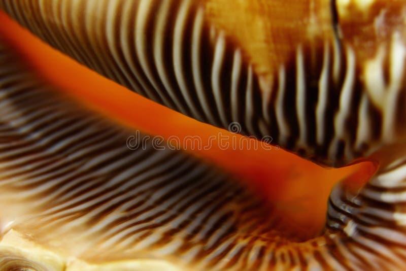 Macro Shells Stock Image
