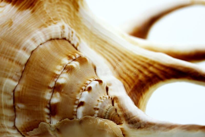 Macro shells stock photos