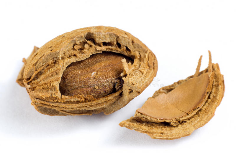 Macro shot of almond in shell isolated on white. Background royalty free stock photography