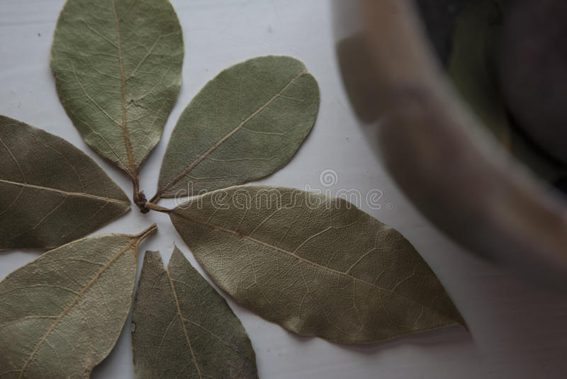 Macro shot of the bay leaves shaped as a flower with a mortar in the background stock photography