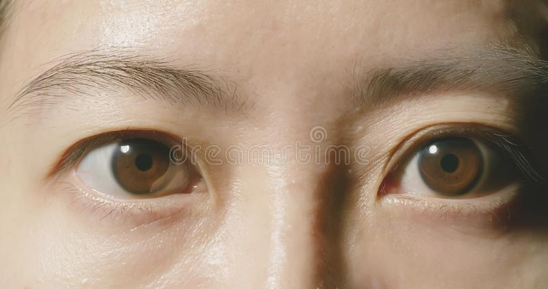 Macro shot of brown eye royalty free stock images