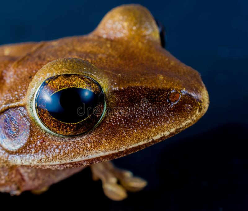 Macro Shot Of Brown Frog Free Public Domain Cc0 Image