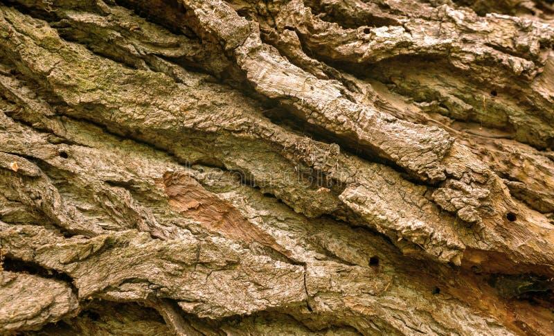 Full frame shot of tree bark. Macro shot of a brown and green bark of a tree, full frame shot stock images