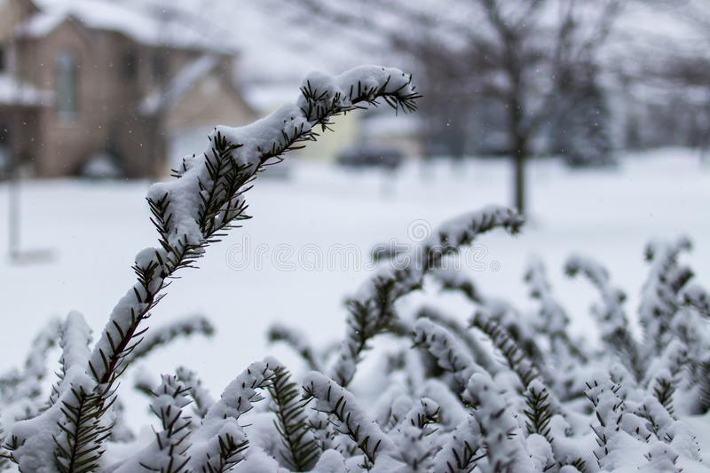 Macro shot of bush covered in snow stock photos