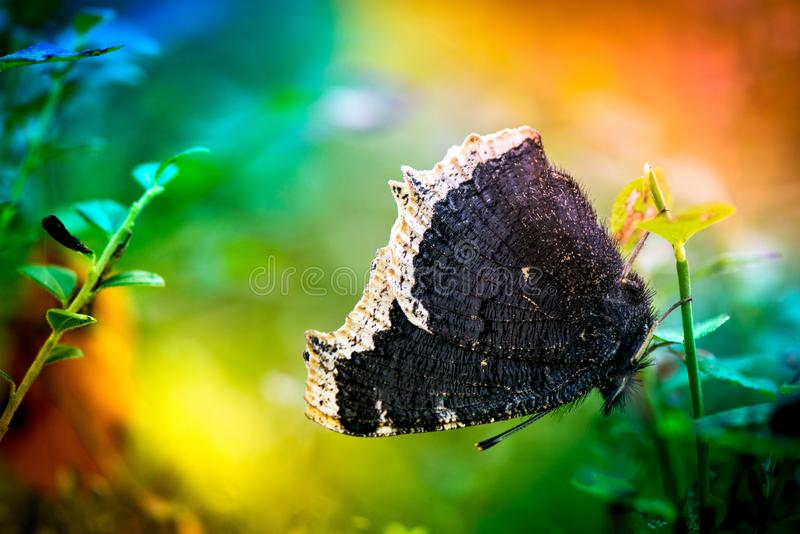 Macro shot of a butterfly royalty free stock image