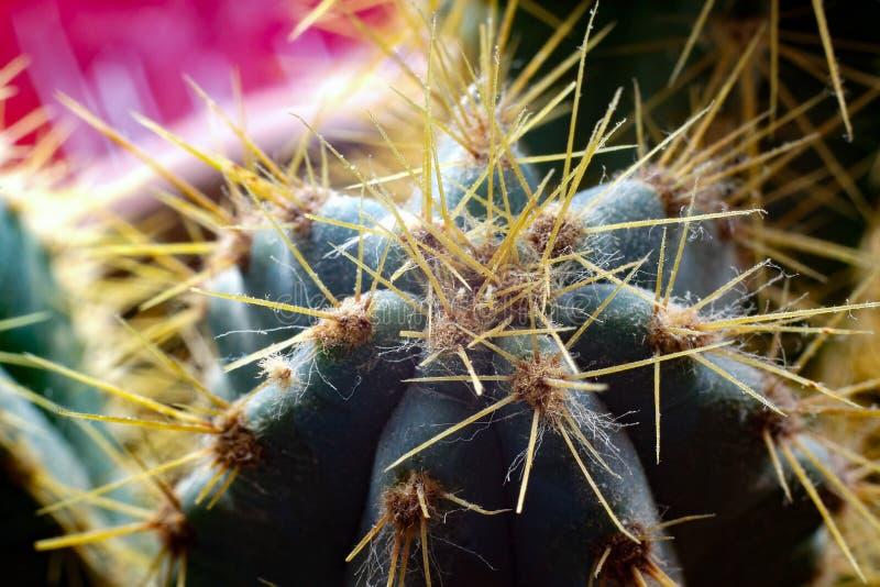 Macro shot of a cactus. stock images