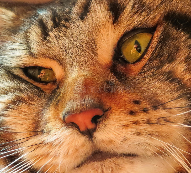A macro shot cat`s face. A macro shot of a young tabby cat`s face. Focus on his gorgeous green eyes stock photo