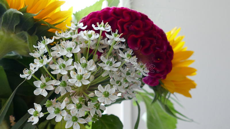 Macro shot of cut flowers in living room royalty free stock images