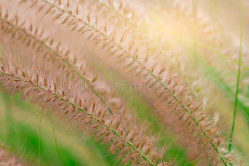 Macro shot detail of beautiful grass flower on blurred green leaves. Background for love peaceful and happy life concept. royalty free stock photos