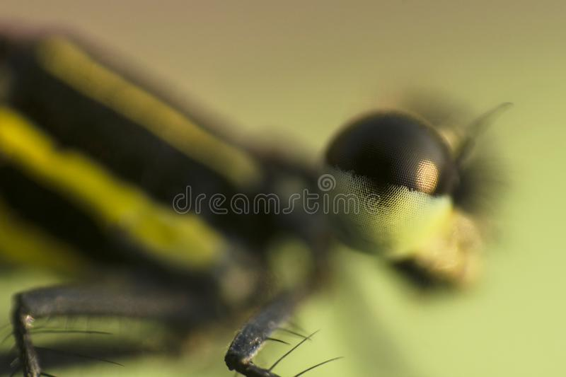 Macro shot of a Dragonfly... As close as it gets stock image
