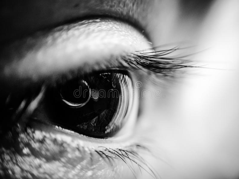 Macro shot of an eye in black and white stock image
