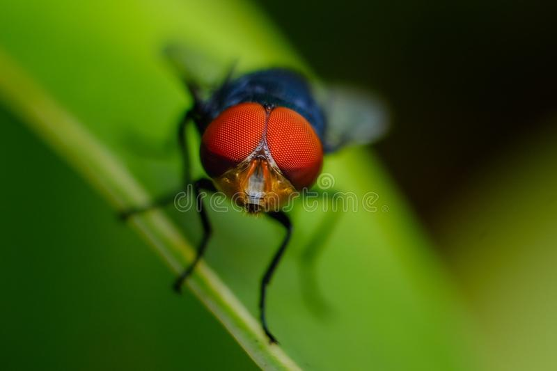 Macro Shot of Fly on Leaf royalty free stock photos