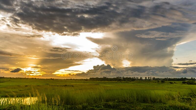 Macro Shot of Green Grass Field Under Cloudy Sky during Sunset stock photos