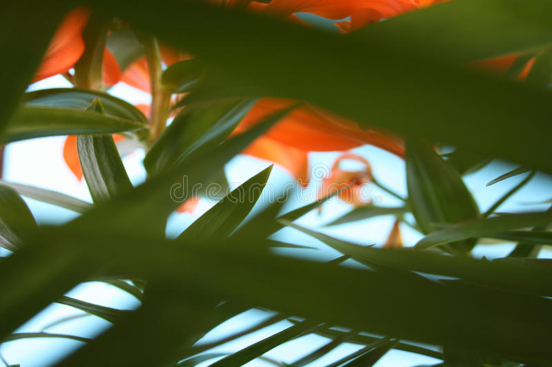 Macro Shot of Green Leaf and Red Flowers stock photography