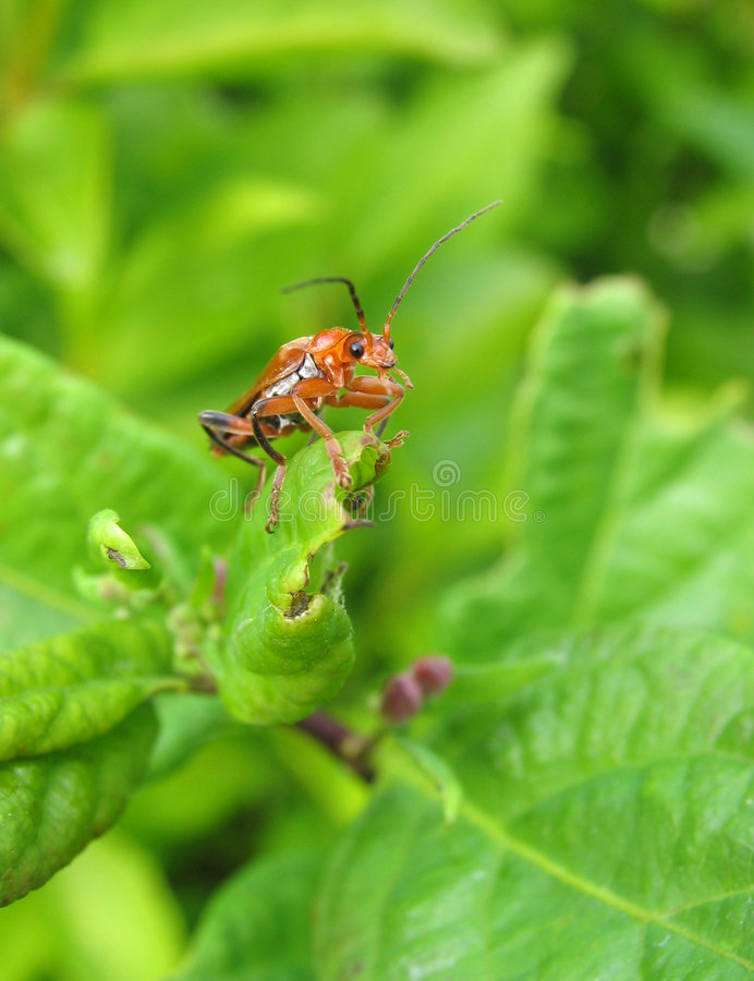 Download Macro Shot Of Insect On A Leaf Stock Photo - Image: 838870