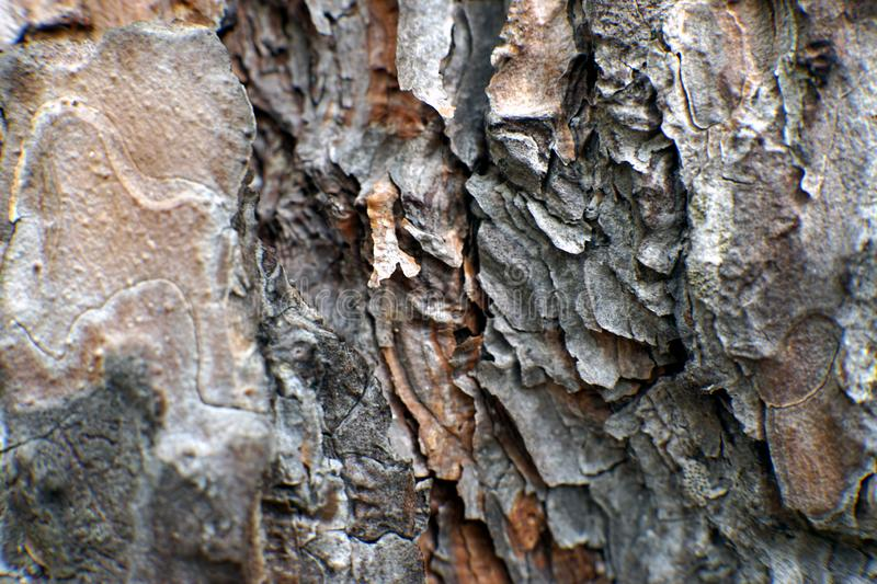 Macro shot of a pine tree bark. Macro shot of an intricate pine tree bark stock photos