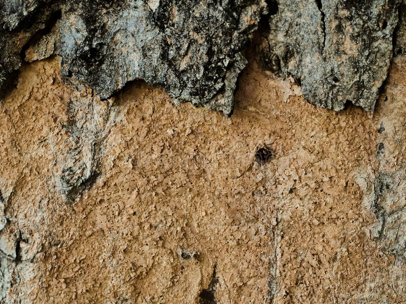Macro shot of oak tree bark texture and background, organic and natural brown skin background royalty free stock photo