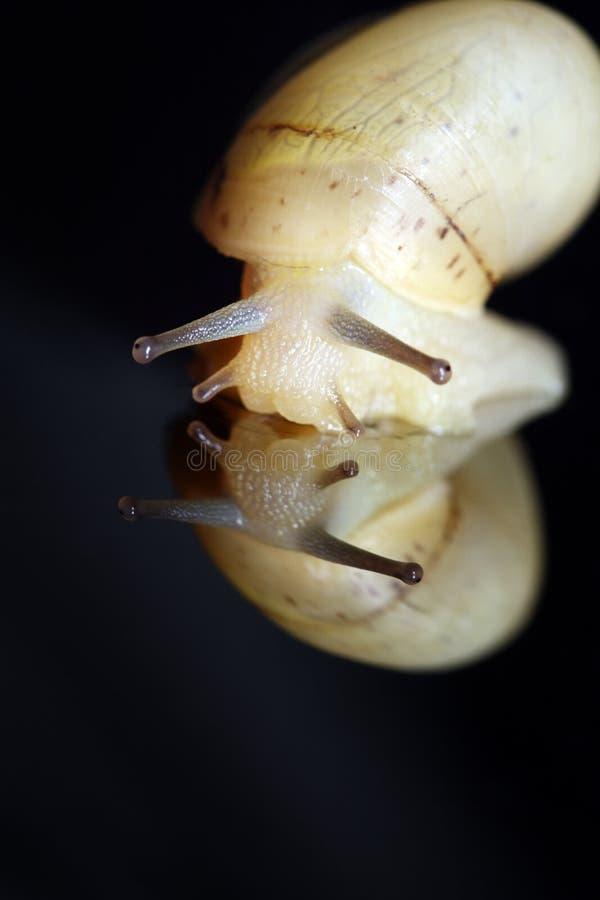 Free Macro Shot Of Snail Stock Image - 15385331