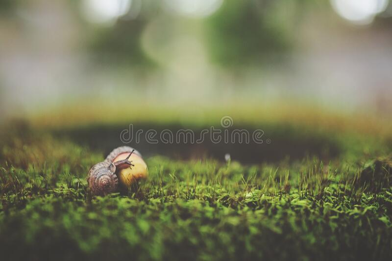 Macro Shot Photography of Brown Snail royalty free stock photography