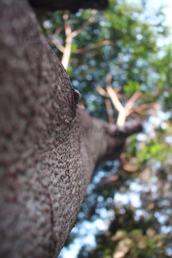 Macro Shot Photography of Brown Twigs stock photos