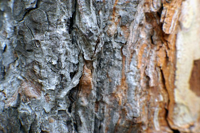 Macro shot of a pine tree bark. Macro shot of an intricate pine tree bark royalty free stock photography