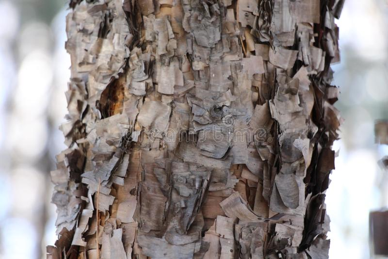 Macro shot of a pine trunk / Texture tree bark royalty free stock photo
